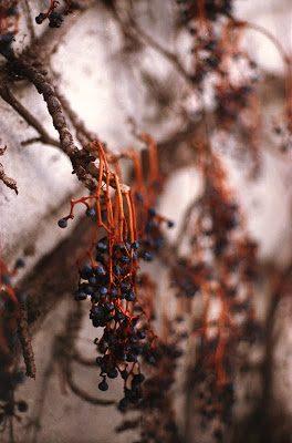 berries-8860420