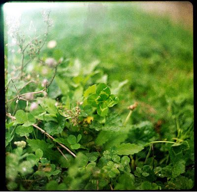 clover_0002-6598893
