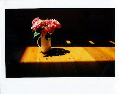 roses2_0003-1527775