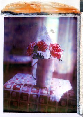uvid_rose1-4658897