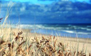 grasses2-300x186-2145863