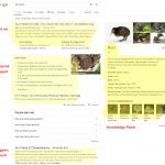 google search page components