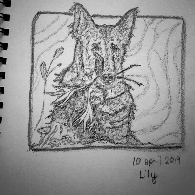 2019-04-10-lily
