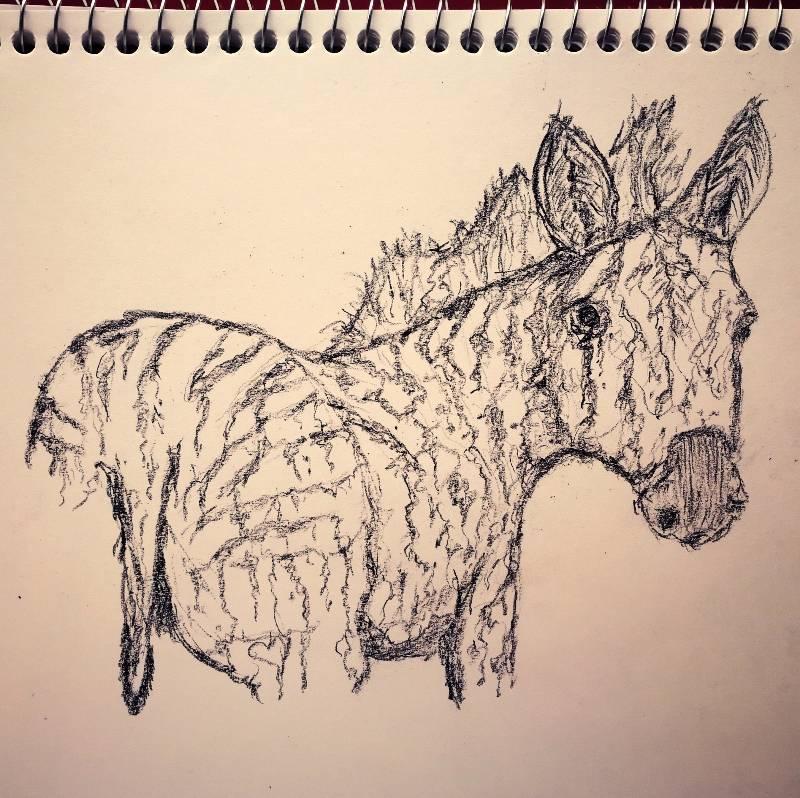 2019-08-12-zebra