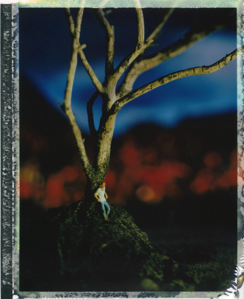 dreaming-tree-e1599947706524-9497077