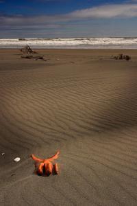 beach-glove+copy.jpg