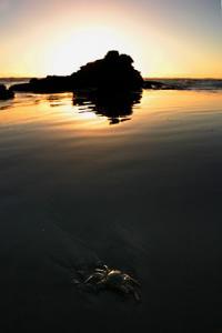 crab21+copy.jpg