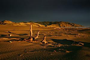 port_driftwood_sun+copy.jpg