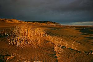 port_sunset+copy.jpg