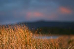 Grassy Dunes
