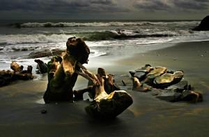 Stumps on Beach III